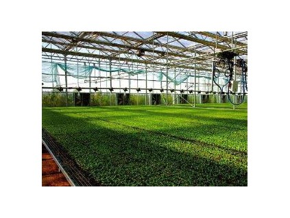 农产品贸易实现稳定增长 山东作物分子育种平台助推主粮作物育种精准化
